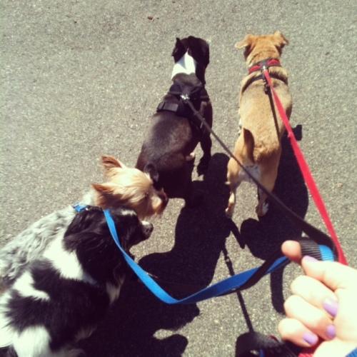 dogswalking